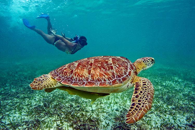 VI Snorkeling